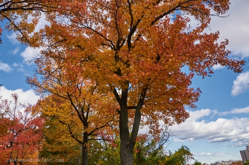 Tree in Highbridge Park, New York City.