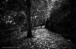 My favorite path. Highbridge Park, New York City.