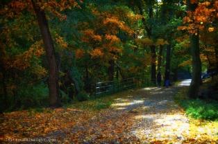 Colors and contrast. Highbridge Park, New York City.