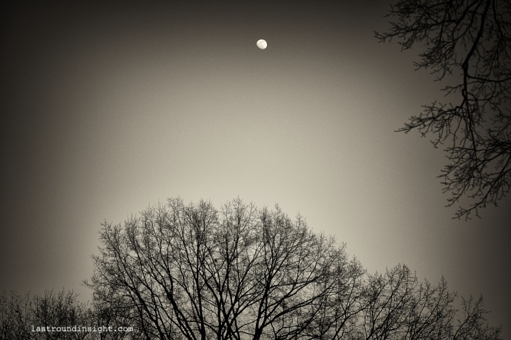 Moon and branches from Central Park, New York City.