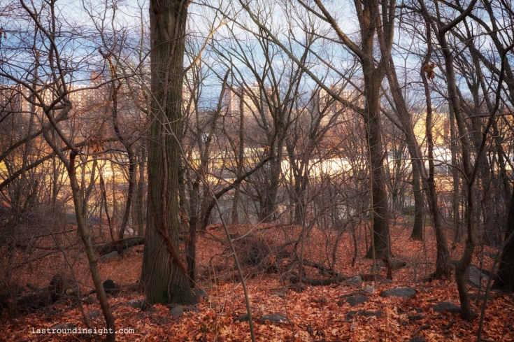 The small forest in winter. High Bridge Park.