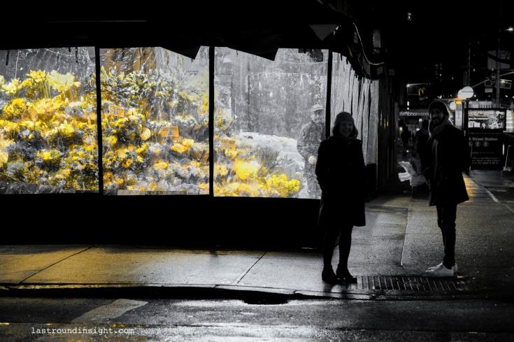 Flowers in the New York night, Lower Manhattan.